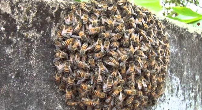 Corpo de Bombeiros foi acionado para retirar enxame de abelhas (Crédito: Imagem Ilustrativa)