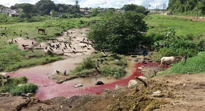 Matadouro de São José da Laje lançava efluentes e resíduos no rio — © Arquivo Pessoal/Fiscalização