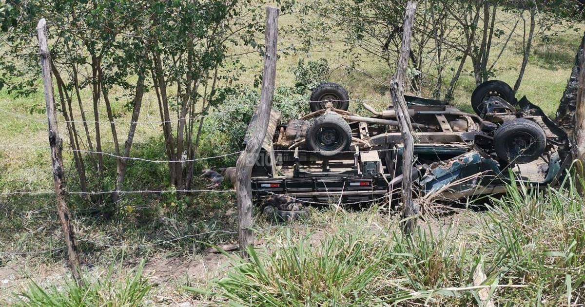 Caminhão carregado com porcos tomba na BR-104 e deixa três pessoas feridas — © BR104