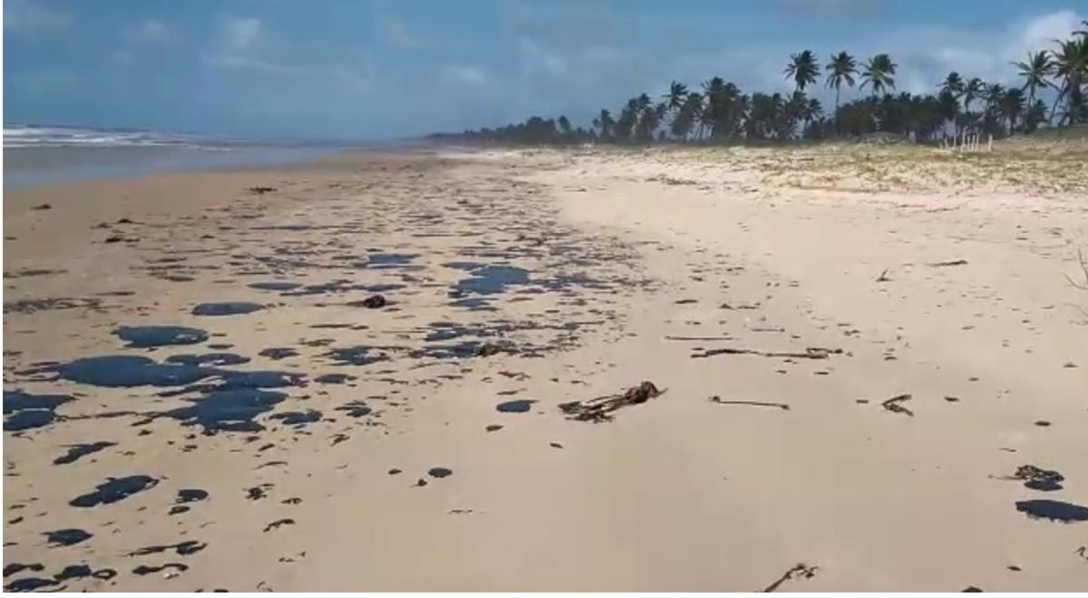 Prefeitura de Maceió lança ferramenta digital que monitora óleos em praias da cidade — © João Arthur