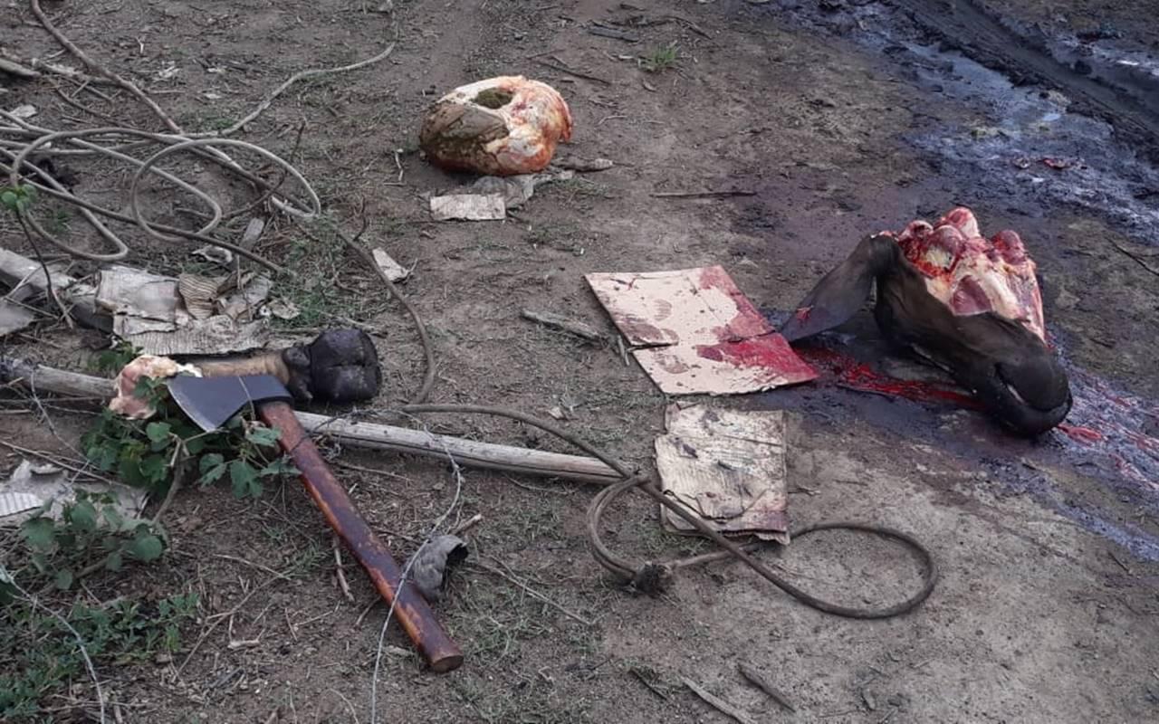 Animais eram abatidos no local sem nenhuma norma legal sobre o abate de animais — © BPRv