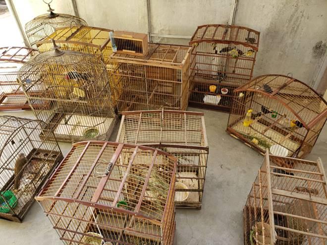 Gaiolas de pássaros recuperadas - Divulgação