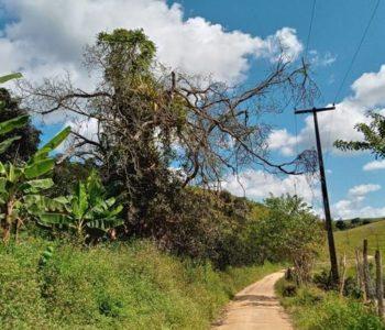 Moradores temem queda de árvore em Santana do Mundaú — © Gustavo Lopes/BR104
