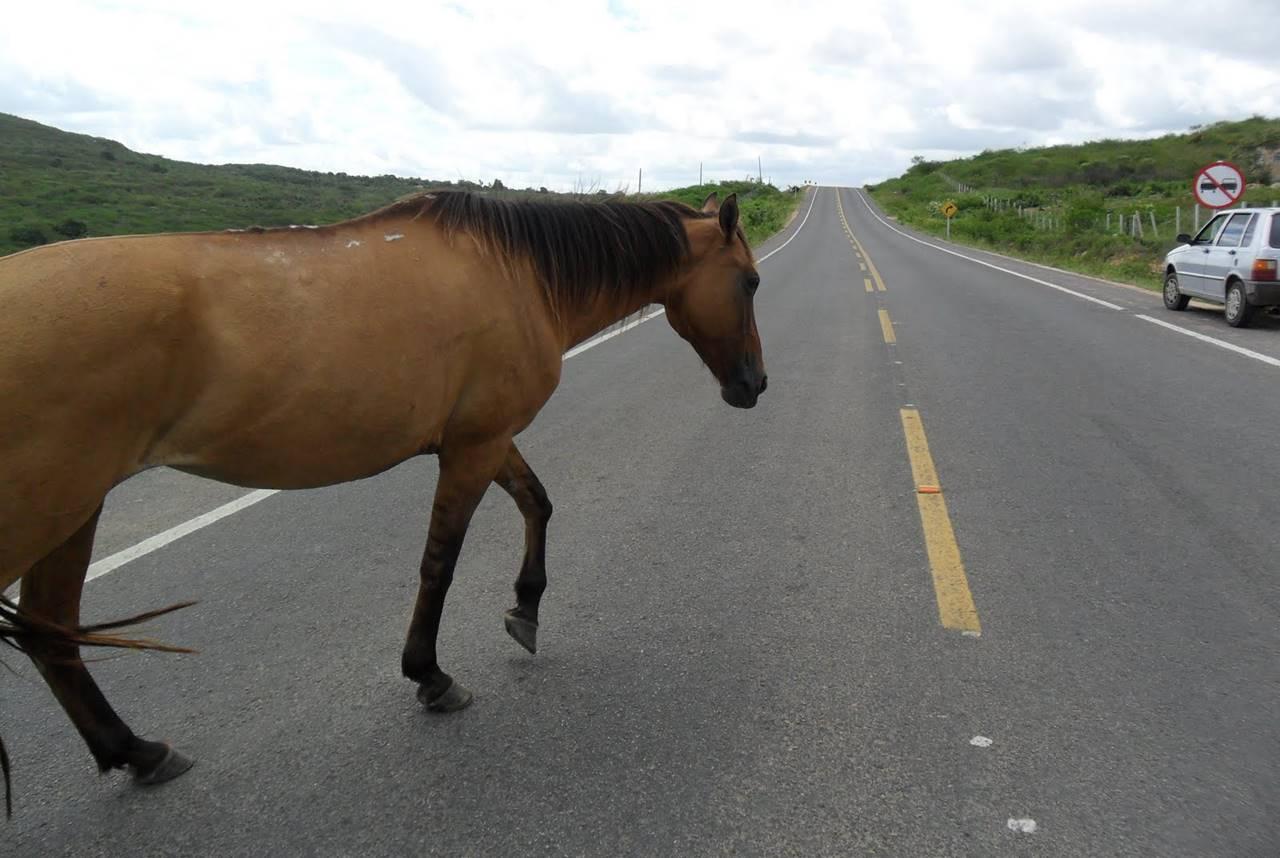 Animais em rodovias federais causaram pelo menos uma morte por mês em Alagoas — © Ilustração
