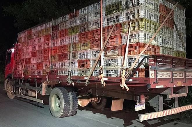 Carga com 1.872 frangos vivos é apreendida sem nota fiscal em União dos Palmares — © BPRv