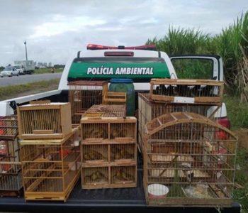 Mais de 50 aves silvestres foram apreendidas pelo BPA em Murici — © BPA