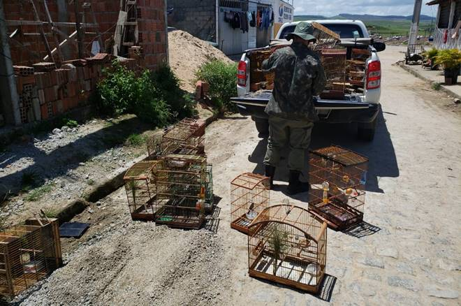 Operação conjunta combate caça e venda de animais silvestres em Alagoas — © Cortesia ao BR104