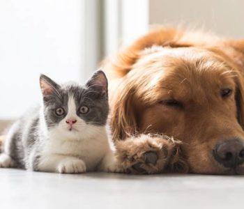 Projeto aumenta punição para quem maltratar cães e gatos — © Reprodução/Ilustração