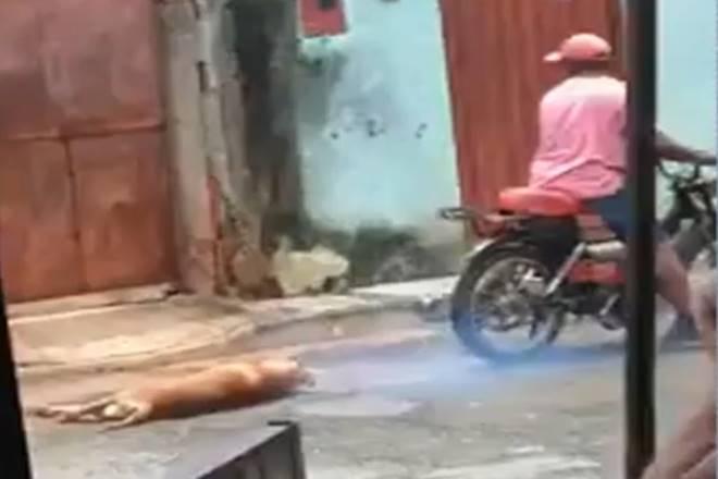 Cachorro é resgatado após ser arrastado amarrado a moto — © Reprodução