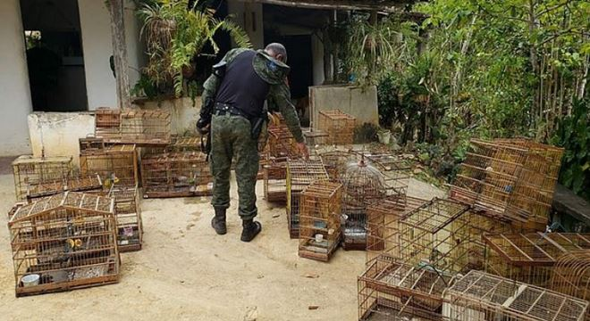 Operação realizada pelo IMA recupera animais silvestres de caçadores na zona da mata alagoana — © IMA