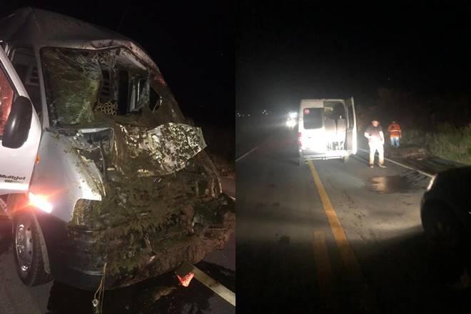 Cavalos na pista causam acidente na BR-104 em União dos Palmares — © Cortesia ao BR104