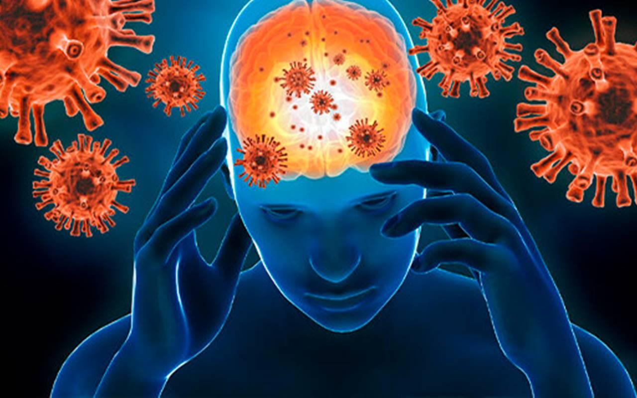 Estudo sobre o coronavírus no cérebro (Reprodução)