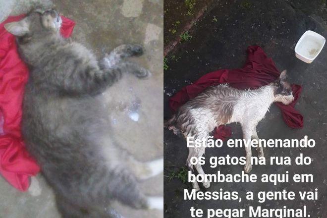 Gatos são encontrados mortos em Messias   © Cortesia ao BR104