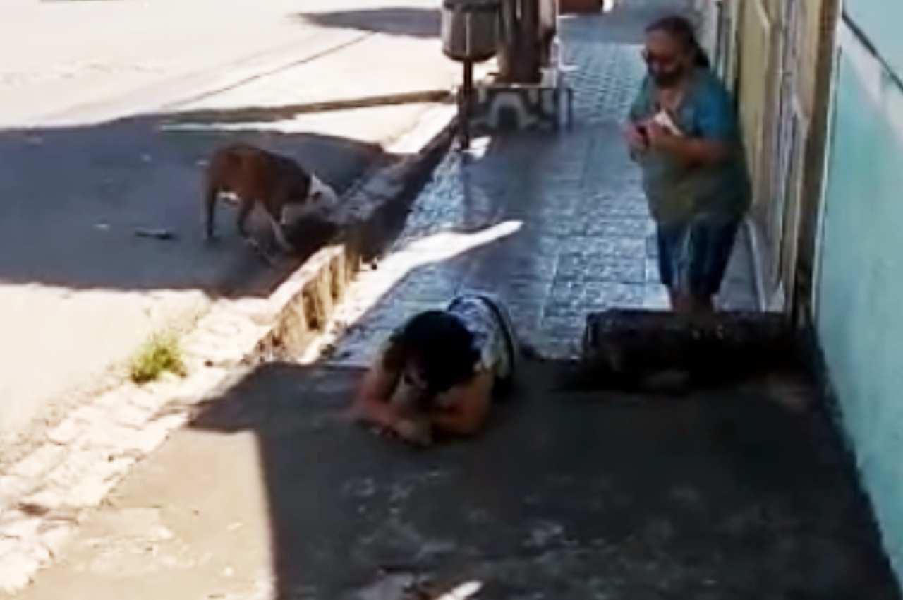 Tutora do cãozinho se desespera ao ver animal sendo morto por pitbull | © Reprodução