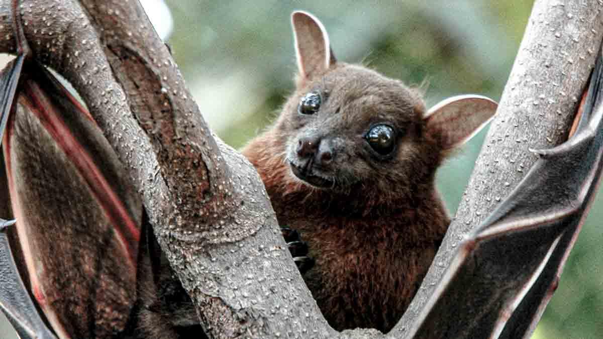 Morcego na árvore - Foto: Reprodução